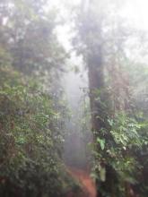 Barbilla National Reserve